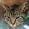 【猫版】ハナちゃんの動物病院 Complete② ~猫の診察記だったり、闘病記だったり~