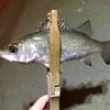 少しだけの根魚ハント🎣(ポイントA-9)