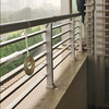 大雨の日と偽カラス(鳥害対策)