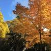 バンクーバーの秋