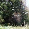 常陸国の古墳と桜
