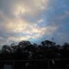 今日の1枚 ~神社の森の上に広がる秋空~