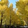 慶應義塾大学の銀杏並木。大学内ランチの「HUB」も