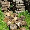 原木の処理