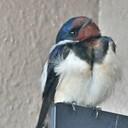 コンデジお伴に野鳥を撮る