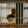 『ブランコの上で考える』『母娘の賑やかキンカ会議』他 今日の錦華鳥・春夏秋冬