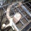 2号機(排ガス規制後) カウル取り外し&下回り塗装