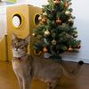 Merry Christmas!  クウとのはじめてのクリスマス