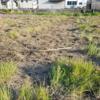 やっと藁散らしが終わりました。次は塩水選から…