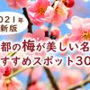【2021年最新版】京都の梅が美しい名所おすすめスポット30選