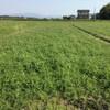五月中旬に植えるコシヒカリの播種とヘアリーベッチのすき込みと畦畔の草刈りとあぜ塗り