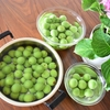 《レシピ》甜菜(てんさい)糖で作る梅シロップ。