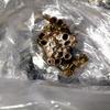 袋井市で軒下に巣を作ったアシナガバチを駆除してきました!