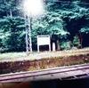 永平寺線とサボテンと金運アップについて。