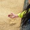 【バケツ稲づくり-7日目】雨。土づくりは明日に