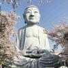 グラサン大仏でおなじみの!?布袋大仏の桜を見に行きました2018。