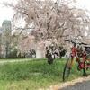 桜を探してサイクリング