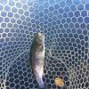 管釣り 開成フォレストスプリングス 10月30日 動画あり
