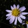 10月27日花と花言葉・歌句
