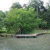 【高梨の多摩雑感vol.23】真夏の小山田緑地は生物の楽園