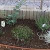 シルバーリーフの植物