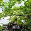 久々に1人で都内へ出て感じた事~東京大神宮&春水堂~