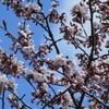 えぃじーちゃんのぶらり旅ブログ~コロナで巣ごもり 北海道石狩市の春編 20210428