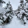 雪の油山から脊振へ