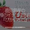 388食目「鹿児島産の新種のイチゴの名前は『ぴかいちご』」2019年1月18日付 西日本新聞朝刊から