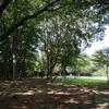 日吉の丘公園(遊具はないが、静かにたたずむ公園)