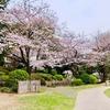 横浜・桜木町周辺でお花見!地元でオススメの場所をご紹介します