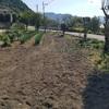 新しい畑作り