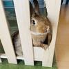 ウサギのちまき今日の2枚『脱走計画』