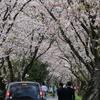 桜の写真を撮りに行ったけど思うようにいかなくて辛い