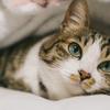 【猫に関するトリビア】