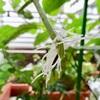挿し芽の成功率をあげる方法