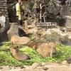 サボテンとカピバラの聖地・伊豆シャボテン動物公園へ行ってきました!ー後編ー