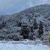 裏山の雪の状況を確認に