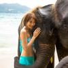 象さんと海水浴