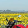 バイクの日のツーリング ひまわりと大山へ(2018/08/19)