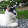 猫と公園(ФωФ)