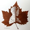 落ち葉に切り込みを入れて作り上げる「切り絵」が超絶すごい