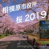 【桜2019】相模原市役所通りの桜を撮影してきた