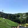 [d:matcha dictionary]-12- 日本全国のお茶いろいろ