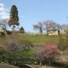 桜ピクニックにぴったりな場所。飯田市動物園の下にある「四季の広場公園」