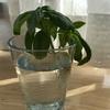 有給消化Day!家事と胡蝶蘭で終わる。