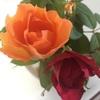 薔薇の花(*゚▽゚)ノ
