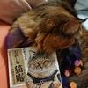 「お直し処猫庵 お困りの貴方へ肉球貸します」引き続き発売中!(ロングバージョン)