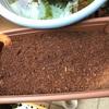 ペットボトル家庭菜園!液体肥料をまくの巻