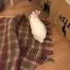 大掃除と電気毛布と先生